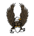 eagle wing ribbon hawk vector image