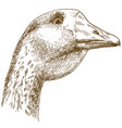 engraving drawing of big goose head vector image vector image
