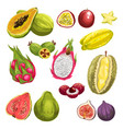 exotic tropical fresh fruit watercolor set design vector image vector image