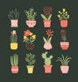 flowers in pots vector image
