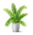 palm tree leaves in a pot vector image vector image