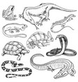 set of reptiles and amphibians wild crocodile vector image