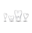 tooth collection for you design vector image