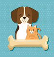 dogs and cats pets friendly vector image vector image