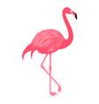 flamingo isolated on white background vector image vector image