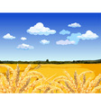 Landscape yellow field with wheat vector image
