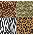 Animal Skin Patterns vector image