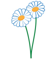 2 camomiles vector image vector image