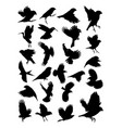 birds silhouette vector image vector image