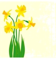 Card with five narcissus vector image vector image