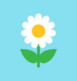 chamomile flower icon in flat style daisy on blue vector image vector image