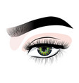 hand-drawn womans sexy luxurious eye with vector image vector image