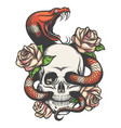 skull with snake and roses vector image vector image