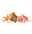 background with seashells tropical underwater vector image vector image