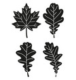 black and white 4 oak leaf silhouette set vector image