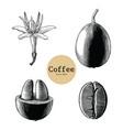 coffee flowercoffee bean hand drawing vintage vector image
