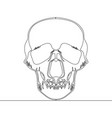 continuous one line drawn skull x-ray vector image vector image