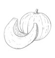 pumpkin outline hand drawn sketch vector image vector image