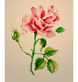 Rose watercolour vector image