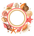 frame with seashells tropical underwater mollusk vector image
