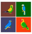 parrots birds breed species animal flayer brochure vector image vector image