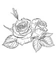 two hand drawn rose flowers in contour b vector image vector image