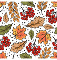autumn rowan maple oak leaves fall nature vector image