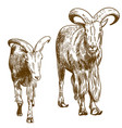 engraving drawing of two mountain goats vector image vector image