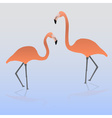 two flamingos on the water eps10 vector image