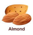 almond icon realistic style vector image vector image