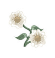 beautiful white flowers floral arrangement vector image