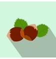 Hazelnut flat icon with shadow vector image vector image