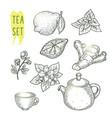 sketch of tea elements include teapot cup mint vector image vector image