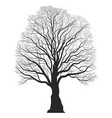 tree silhouette black bare oak outline detailed vector image vector image