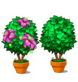 two miniature trees in pots one tree with flower vector image vector image
