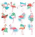 flamingo tropical pink flamingos and exotic vector image