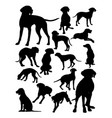 hungarian viszla dog animal silhouette vector image vector image