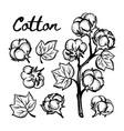 cotton monochrome sketch clip art vector image