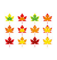 set multicolored autumn maple leaves vector image