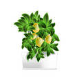 spotted plant lemon tree in a white pot element vector image vector image
