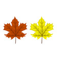 two maple leaves vector image vector image