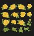 yellow roses hand drawn flowers and vector image vector image