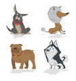 funny cartoon dogs characters different breads vector image