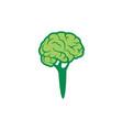 abstract broccoli brain logo icon vector image vector image