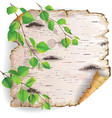 Birch bark and leaves vector image vector image