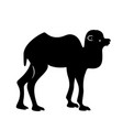 black camel silhouette vector image