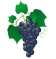 blue vine vector image vector image