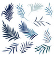 set elegant palm leaves in blue color tropical vector image vector image