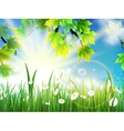 Green leaves on sunny vector image