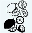 Lemon whole or sliced vector image vector image